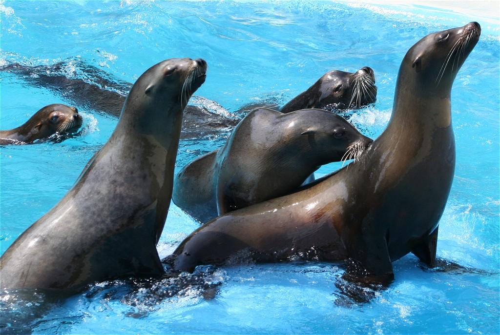 http://www.stichwort-katalog.de/tiere/seehund-seehunde-001-zoo-gross.jpg